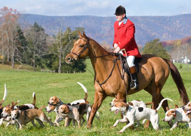 fox-hunting-hd-pictures-4