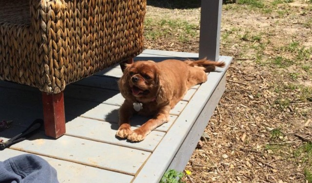 Going to the barn means Sleepy Puppy gets to do her favourite thing ever - sunbathing!