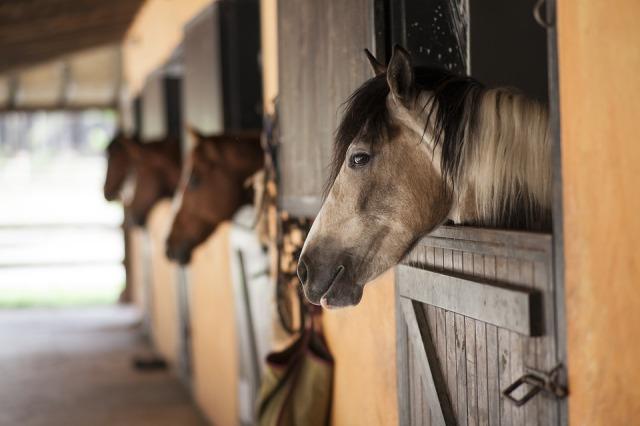 horse-2649609_960_720